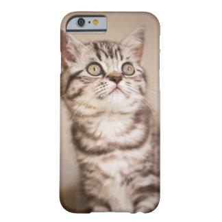 Capa Barely There Para iPhone 6 Gatinho britânico cinzento bonito do cabelo curto