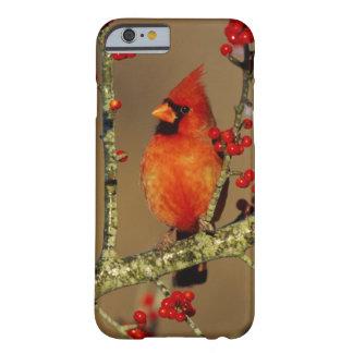 Capa Barely There Para iPhone 6 Homem cardinal do norte empoleirado, IL