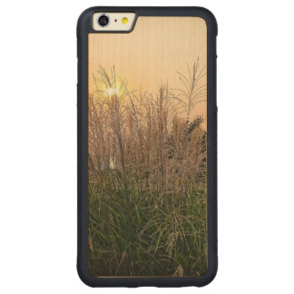 Capa Bumper Para iPhone 6 Plus De Bordo, Carved Junco no por do sol