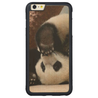 Capa Bumper Para iPhone 6 Plus De Bordo, Carved Pandas do bebê que jogam - panda bonito da panda
