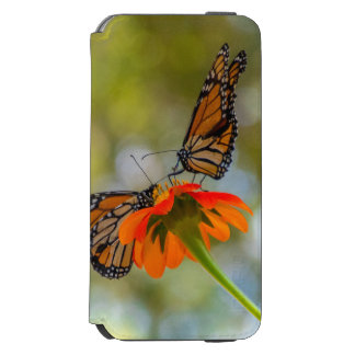 Capa Carteira Incipio Watson™ Para iPhone 6 Borboletas de monarca em Wildflowers