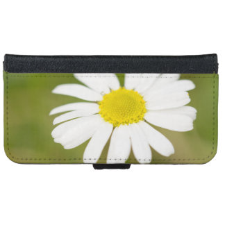 Capa Carteira Para iPhone 6/6s Margarida de Oxeye