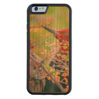 Capa De Cerejeira Bumper Para iPhone 6 Pica-pau na floresta que Pecking a árvore