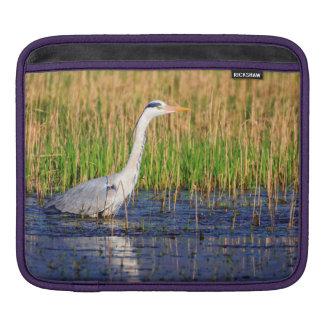 Capa De iPad Garça-real cinzenta, ardea cinerea, em uma lagoa