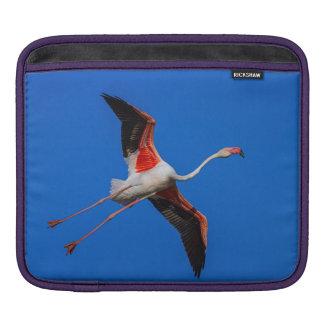 Capa De iPad Maior flamingo, roseus do phoenicopterus