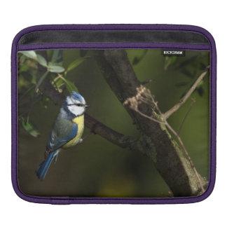 Capa De iPad Melharuco azul euro-asiático, caeruleus dos