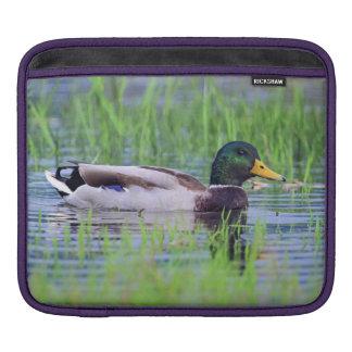 Capa De iPad Pato masculino do pato selvagem que flutua na água