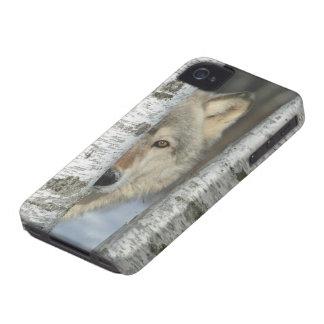 capa de iphone 4 com o PIC do lobo cinzento em