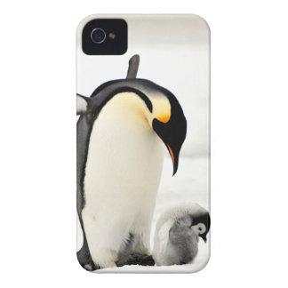 capa de iphone 4 da foto dos pinguins