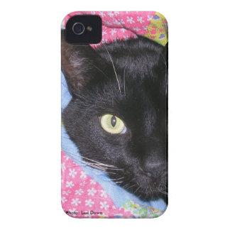 capa de iphone 4: Gato engraçado envolvido nas