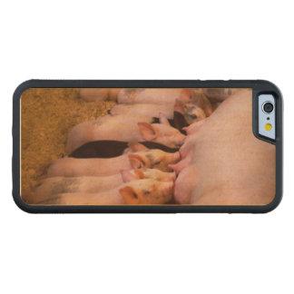 Capa De Madeira De Bordo Bumper Para iPhone 6 Animal - porco - comida do conforto