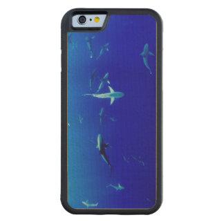 Capa De Madeira De Bordo Bumper Para iPhone 6 Tubarões subaquáticos