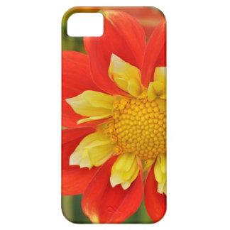 Capa de telefone alaranjada do impressão floral da capa para iPhone 5