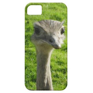 Capa de telefone da avestruz do peekaboo capa barely there para iPhone 5