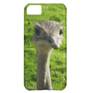 Capa de telefone da avestruz do peekaboo capa para iPhone 5C