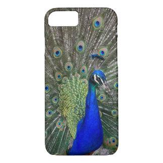 Capa de telefone do pavão