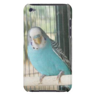 Capa do ipod touch do reino animal HD - pássaro