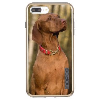 Capa Incipio DualPro Shine Para iPhone 8 Plus/7 Pl Cão ostentando bonito de Vizsla