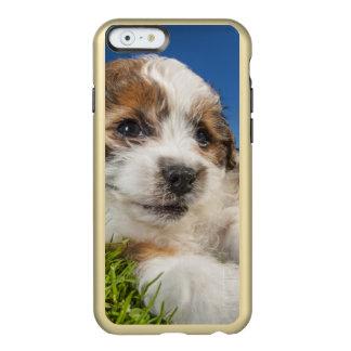 Capa Incipio Feather® Shine Para iPhone 6 Cão de filhote de cachorro bonito (Shitzu)