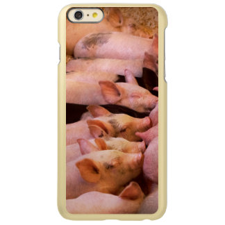 Capa Incipio Feather® Shine Para iPhone 6 Plus Animal - porco - comida do conforto