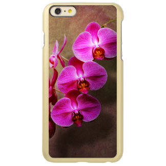 Capa Incipio Feather® Shine Para iPhone 6 Plus Orquídea - Phalaenopsis - a orquídea de traça