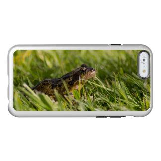 Capa Incipio Feather® Shine Para iPhone 6 Sapo