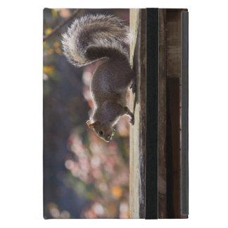 Capa iPad Mini Esquilo de incandescência