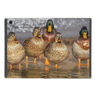 Capa iPad Mini Patos pequenos bonitos do pato selvagem