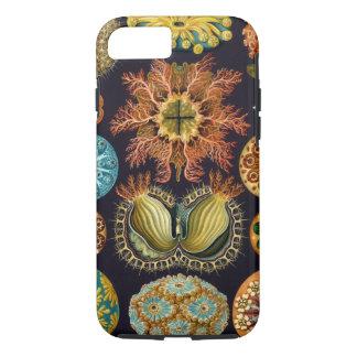 Capa iPhone 8/ 7 Ascidiae por Ernst Haeckel, animais marinhos do
