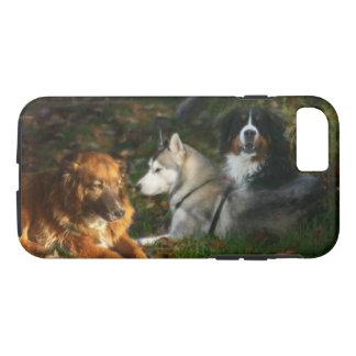Capa iPhone 8/ 7 Cão de montanha de Bernese, belga Shep do rouco