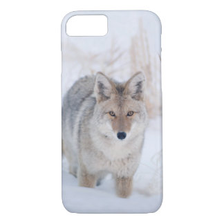 Capa iPhone 8/ 7 Chacal no iphone dos animais selvagens do inverno