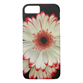 Capa iPhone 8/ 7 Duas margaridas brancas do Gerbera