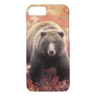Capa iPhone 8/ 7 EUA, Alaska, Denali NP, urso de urso fêmea
