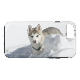 Capa iPhone 8/ 7 Filhote de cachorro do rouco Siberian na neve