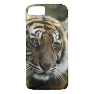Capa iPhone 8/ 7 Foto do tigre de Bengal