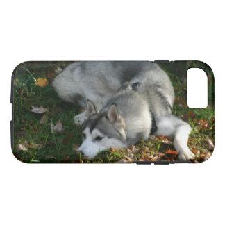 Capa iPhone 8/ 7 Rouco Siberian em repouso