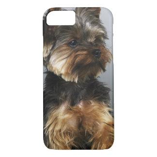 Capa iPhone 8/ 7 Yorkshire terrier, fim-acima