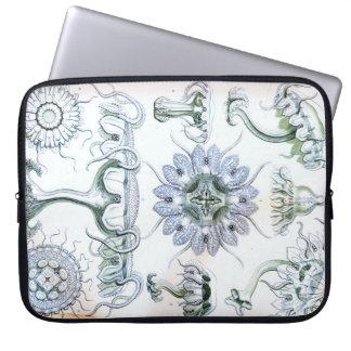 Capa Para Computador Medusa de Ernst Haeckel Discomedusae