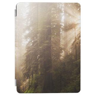 Capa Para iPad Air Árvores da sequóia vermelha na névoa da manhã com