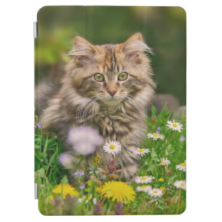Capa Para iPad Air Gato macio bonito do gatinho do racum de Maine na