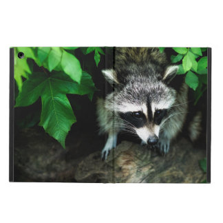 Capa Para iPad Air Guaxinim na natureza dos animais selvagens da