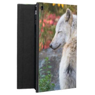 Capa Para iPad Air Lobo sereno do outono