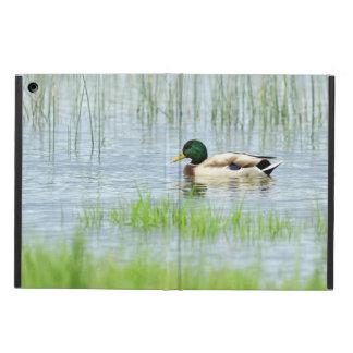 Capa Para iPad Air Pato masculino do pato selvagem que flutua na água