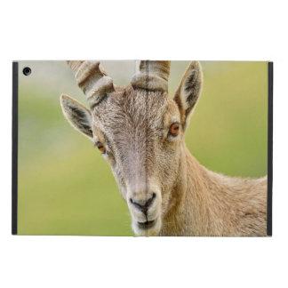 Capa Para iPad Air Retrato de um íbex
