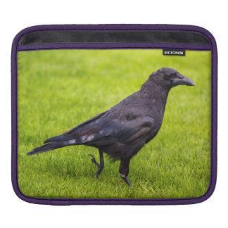 Capa Para iPad Corvo preto