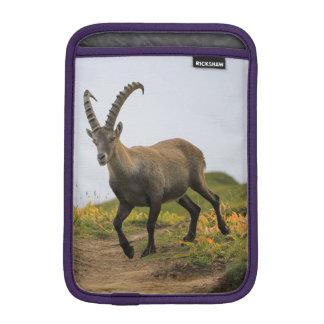 Capa Para iPad Mini Íbex selvagem alpino, da cabra, ou steinbock