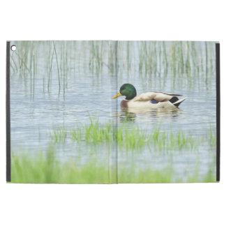 "Capa Para iPad Pro 12.9"" Pato masculino do pato selvagem que flutua na água"