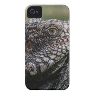 Capa Para iPhone 4 Case-Mate 1920px-Iguanidae_head_from_Venezuela