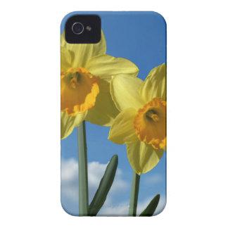 Capa Para iPhone 4 Case-Mate Dois Daffodils amarelos 2,2