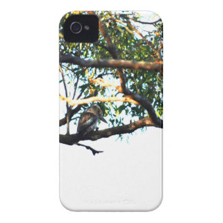 CAPA PARA iPhone 4 Case-Mate  KOOKABURRA QUEENSLAND RURAL AUSTRÁLIA
